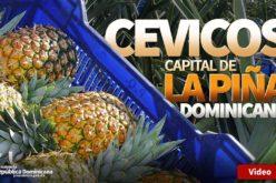 Dicen que Cevicos es La Capital de la Piña; una piña que si en algún momento fue agria, ha vuelvo a ser dulce