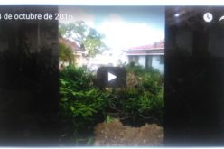 (Video) Tumbaron la caoba… Es el «progreso»…