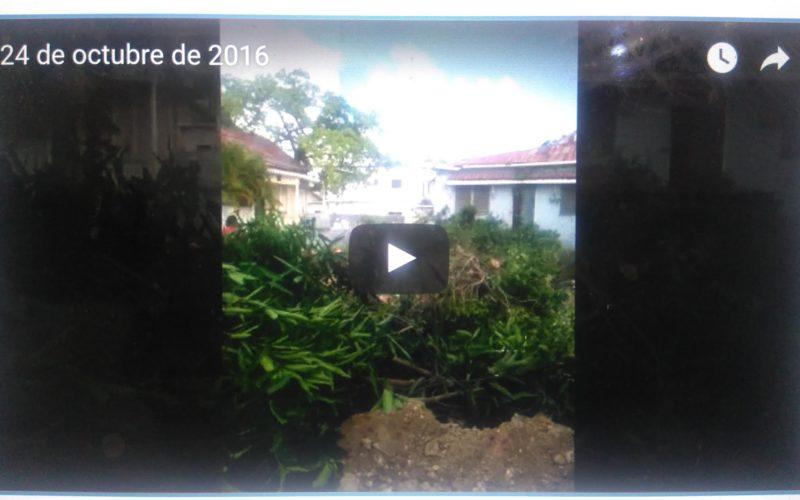 (Video) Tumbaron la caoba… Es el «progreso»…