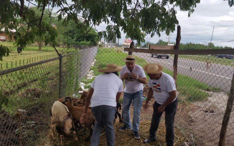 El Pachá otra vez entre chivos, vacas, puercos, para regalar a los televidentes de Pégate y Gana en Navidad