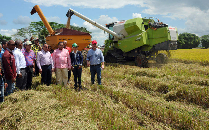 Gran producción de arroz en RD… Se espera cosecha supere los 11 millones de quintales…