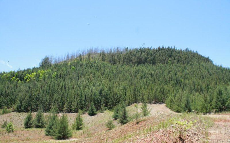 Accionistas Falcombridge RD dicen estar comprometidos con minería responsable, que impulsa economía y protege medioambiente