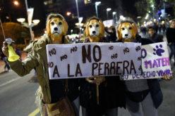 Protesta en defensa de los perros en Uruguay… No quieren perreras…!!