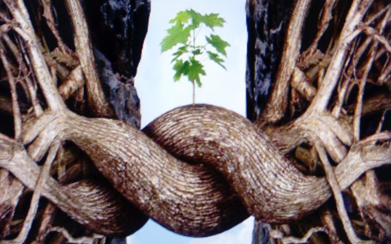 Resiliencia, la habilidad positiva de seguir adelante