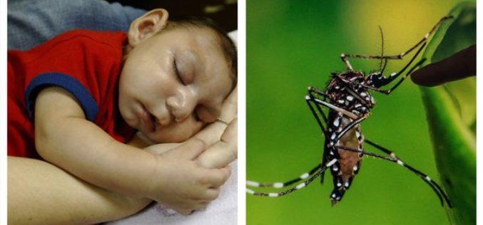 Por qué provoca microcefalia el virus del Zika…? Científicos chinos pueden tener la explicación