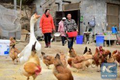 China iniciará campaña contra la corrupción en proyectos que buscan reducción de la pobreza