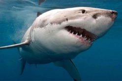Los 300 tiburones en el camino…