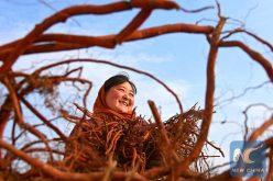Más de 68 millones de personas salen de la pobreza en China en 5 años