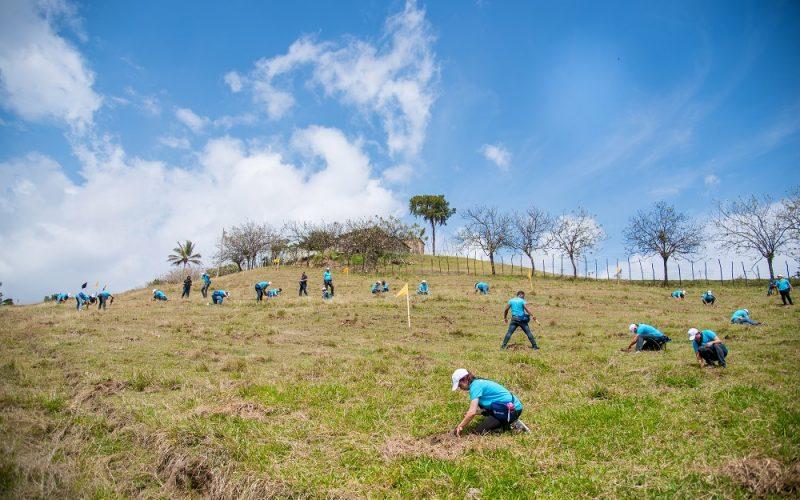 Empleados de Servicios Digitales Popular reforestando en el Plan Sierra