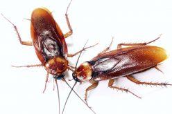 Comiendo cucarachas, avispas, grillos, hormigas, tarántulas y alacranes en una feria gastronómica