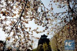 Ciudad china limitará construcción apartamentos para proteger reliquias antiguas
