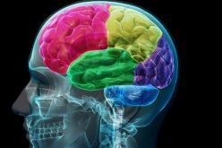 Aprender música y hablar más de un idioma hace más eficiente el cerebro