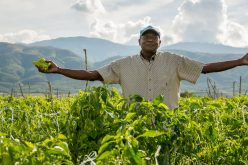 El presidente Medina con su mensaje a los agricultores; este mertes es su día
