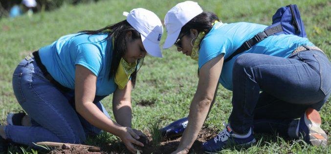 Empleados del Banco Popular siembran más de 6 mil árboles en San José de las Matas
