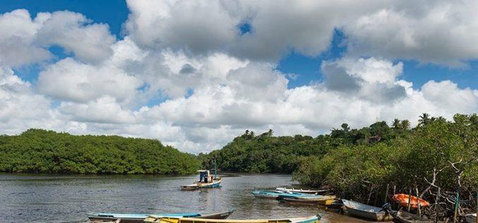 Los manglares deben cuidarse, recomienda el Banco Mundial