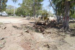 Ministerio de Cultura explica derribo de árboles en Plaza de la Cultura