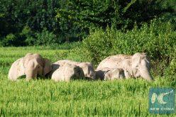 Elefante salvaje mata a 5 personas; 3 eran de una misma familia