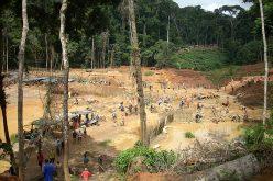 El Banco Mundial trata «La convivencia entre los bosques y la minería: ¿cómo abordar los desafíos?»