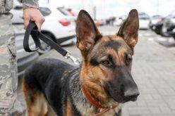 Una perra policía que, ya jubilada, ayuda a su amo enfermo