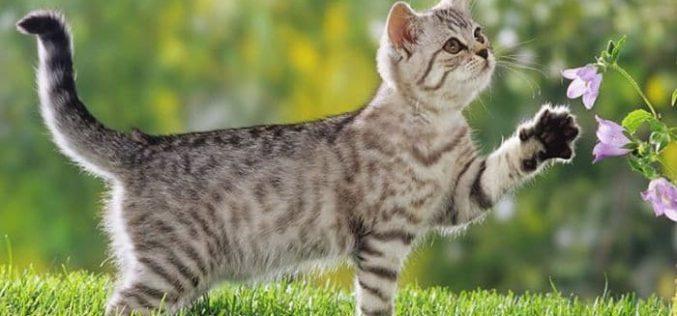 Garabato…/ El gato mueve la cola para cazar a la presa