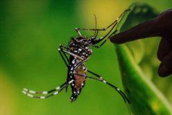 La chikungunya ataca a 20 mil personas en Etiopía