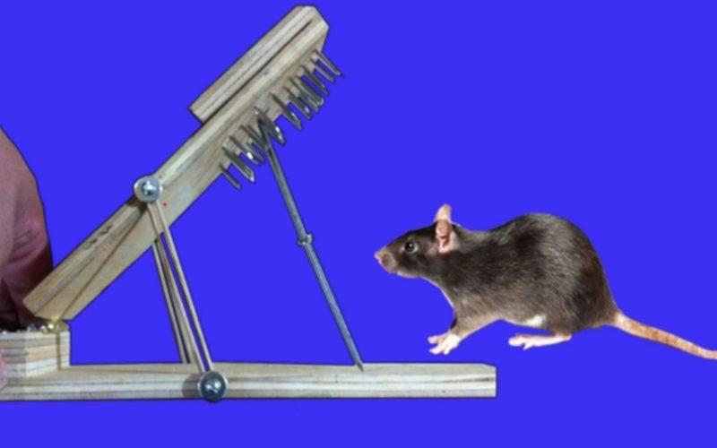 Xiomarita no es gata, pero quiere cazar un ratón…