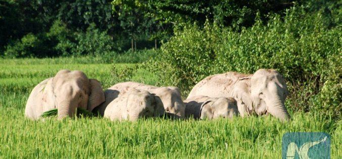 Hallan 11 elefantes muertos en bosque de Zimbawe